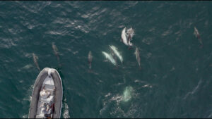 Session Kitefoil au Glénan en compagnie des dauphins social
